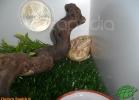 verona-reptiles-2012-domca-esotik-40