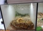 verona-reptiles-2012-domca-esotik-43