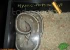 verona-reptiles-2012-domca-esotik-45
