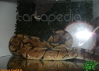 verona-reptiles-2012-domca-esotik-46