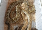 verona-reptiles-2012-domca-esotik-48