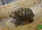 verona-reptiles-2012-fabio-minati-002
