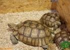 verona-reptiles-2012-fabio-minati-003