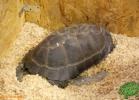 verona-reptiles-2012-fabio-minati-004