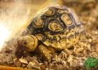 verona-reptiles-2012-fabio-minati-007