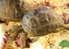 verona-reptiles-2012-fabio-minati-008