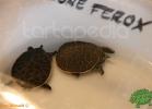 verona-reptiles-2012-fabio-minati-010