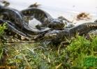 verona-reptiles-2012-fabio-minati-013