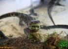 verona-reptiles-2012-fabio-minati-014
