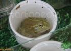 verona-reptiles-2012-fabio-minati-019