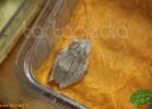 verona-reptiles-2012-fabio-minati-021