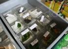 verona-reptiles-2012-fabio-minati-022