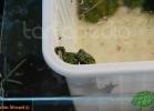 verona-reptiles-2012-fabio-minati-025