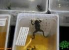 verona-reptiles-2012-fabio-minati-026