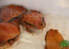 verona-reptiles-2012-fabio-minati-029