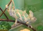 verona-reptiles-2012-fabio-minati-032