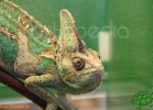 verona-reptiles-2012-fabio-minati-034