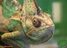 verona-reptiles-2012-fabio-minati-035