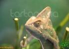 verona-reptiles-2012-fabio-minati-037