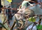 verona-reptiles-2012-fabio-minati-038