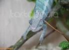 verona-reptiles-2012-fabio-minati-039