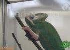 verona-reptiles-2012-fabio-minati-040