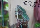 verona-reptiles-2012-fabio-minati-041