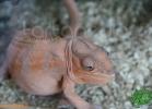 verona-reptiles-2012-fabio-minati-042