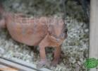 verona-reptiles-2012-fabio-minati-043