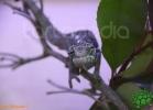 verona-reptiles-2012-fabio-minati-044