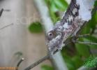 verona-reptiles-2012-fabio-minati-045