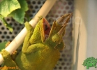verona-reptiles-2012-fabio-minati-050