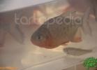 verona-reptiles-2012-fabio-minati-055