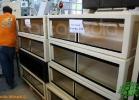 verona-reptiles-2012-fabio-minati-060