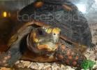 Verona Reptiles 2012 - Nadia R.