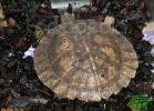 verona-reptiles-2012-nadia-r-32