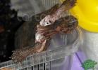 verona-reptiles-2012-nadia-r-33