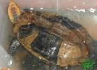 verona-reptiles-2012-nadia-r-34