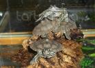verona-reptiles-2012-nadia-r-35