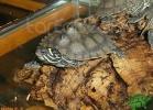 verona-reptiles-2012-nadia-r-36