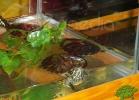 verona-reptiles-2012-nadia-r-37