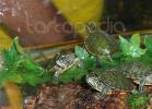 verona-reptiles-2012-nadia-r-38