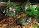 verona-reptiles-2012-nadia-r-39