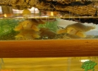 verona-reptiles-2012-nadia-r-40