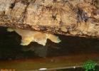 verona-reptiles-2012-nadia-r-41