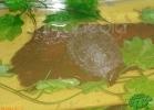 verona-reptiles-2012-nadia-r-42