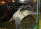 verona-reptiles-2012-nadia-r-43