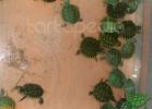 verona-reptiles-2012-nadia-r-44