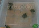 verona-reptiles-2012-nadia-r-45