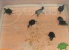 verona-reptiles-2012-nadia-r-46